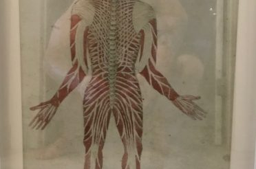 Back Body